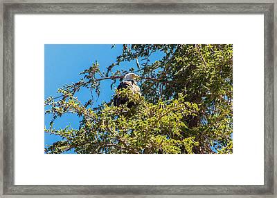 Eye Spy Framed Print by Lynn Bauer