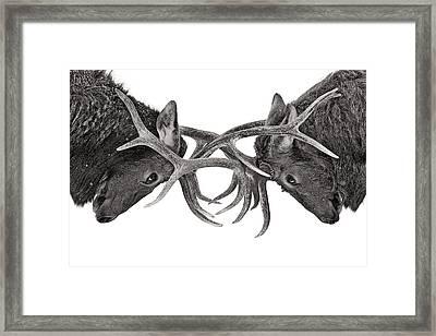 Eye To Eye Framed Print by Jim Cumming