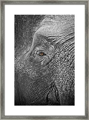Eye To The Soul Framed Print by Steve Smith