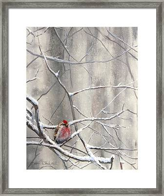 Eyeing The Feeder Alaskan Redpoll In Winter Framed Print by Karen Whitworth