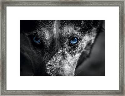 Eyes In The Darkness Framed Print by David Morefield