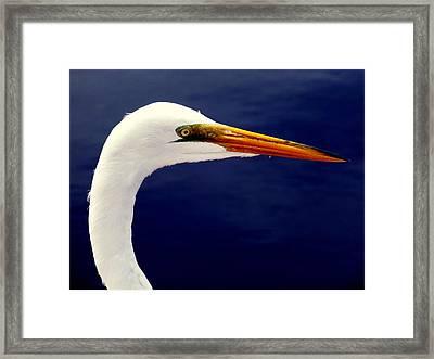 Eyes Of Steel Framed Print by Karen Wiles