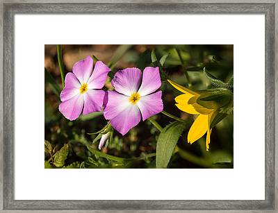 Eyes Of Texas Framed Print by Thomas Pettengill