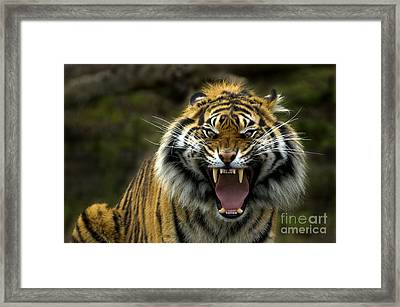 Eyes Of The Tiger Framed Print by Mike  Dawson