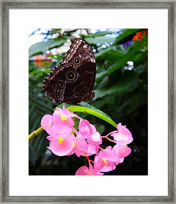 Eyes On Wings Framed Print by Judy Wanamaker