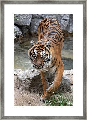 Eyes On You Framed Print by Dan Holm
