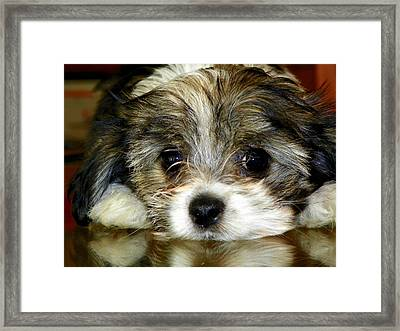 Eyes On You Framed Print by Karen Wiles