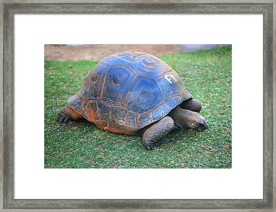 F 1. Giant Turtle In The Pamplemousse Botanical Garden. Mauritius Framed Print by Jenny Rainbow
