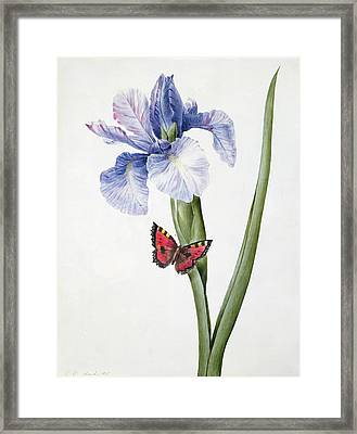Blue Iris With Butterfly , 1826 Framed Print by Louise D'Orleans