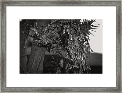 Face In The Maple Tree 2 Framed Print by Leana De Villiers