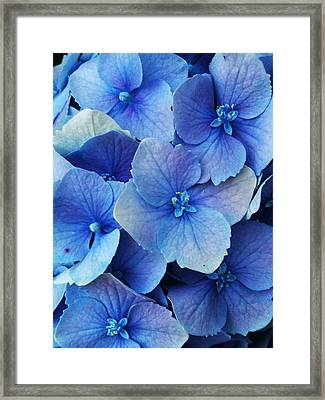Faces Framed Print by Lucy D