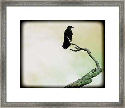 Fade Into Framed Print by Gothicrow Images