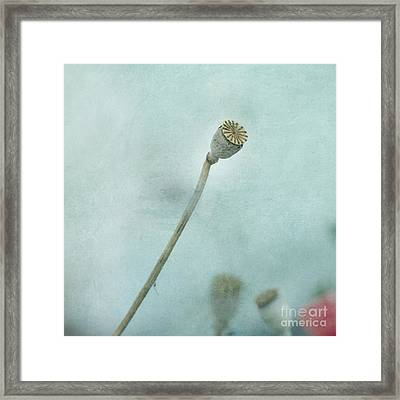 faded summer II Framed Print by Priska Wettstein