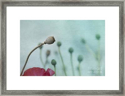 faded summer III Framed Print by Priska Wettstein