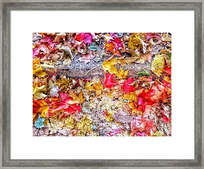 Fallen Hues Framed Print by Marianna Mills