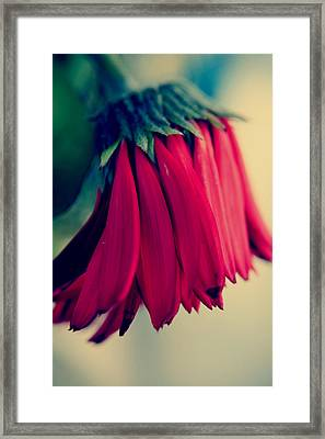 Fading Passion Framed Print by Laurie Search