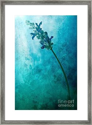 Fae Framed Print by John Edwards