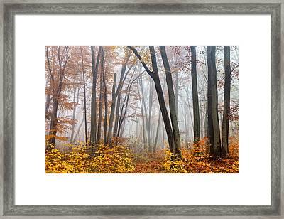 Fairy Forest Framed Print by Evgeni Dinev