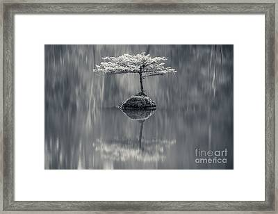 Fairy Lake Fir Black And White Framed Print by Carrie Cole