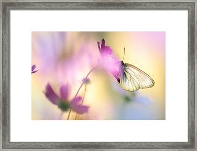 Fairy Light Framed Print by Jenny Rainbow