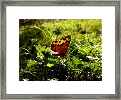 Fairy Framed Print by Lucy D