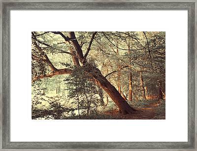 Fairy Woods Framed Print by Jenny Rainbow