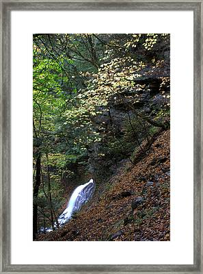 Fairyland Framed Print by J Allen