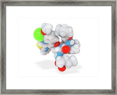 Faldaprevir Drug Molecule Framed Print by Ramon Andrade 3dciencia