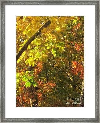 Fall Abstract 2 Framed Print by Tara  Shalton