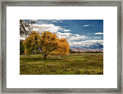 Fall And Winter Framed Print by Cat Connor