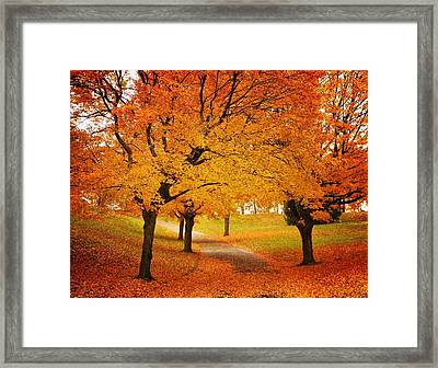 Fall Blaze Framed Print by Chris Berry