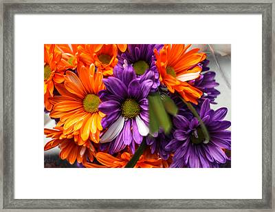 Fall Bloom Framed Print by Brandon Hussey