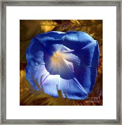 Fall Blues Framed Print by Kim Pate