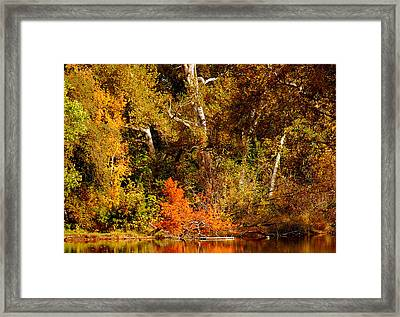 Fall Color Creekside Framed Print by Holly Blunkall
