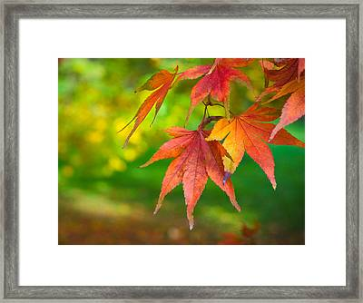 Fall Color Framed Print by Jeff Klingler