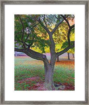 Fall Color Framed Print by Lisa Phillips