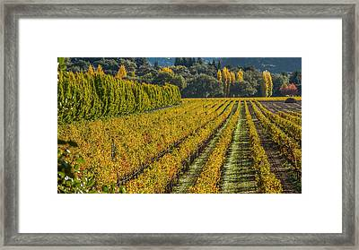 Fall Color Napa Style Framed Print by Bill Gallagher