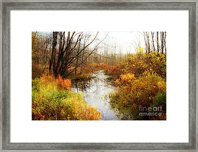 Fall Colors  Framed Print by A New Focus Photography