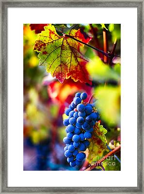 Fall Colors Of Napa Valley Framed Print by George Oze
