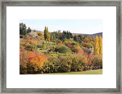 Fall Colors U Of I Arboretum I Framed Print by Linda Meyer