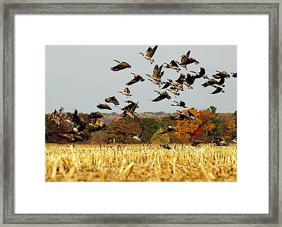 Fall Feast Framed Print by Thomas Young