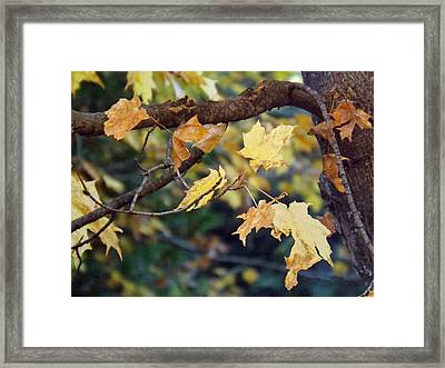 Fall Foilage Framed Print by Brenda Brown