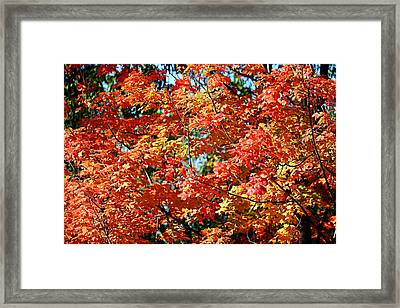 Fall Foliage Colors 22 Framed Print by Metro DC Photography