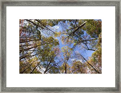 Fall Foliage - Look Up 2 Framed Print by Kirkodd Photography Of New England