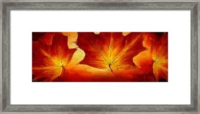 Fall Foliage Framed Print by Lourry Legarde