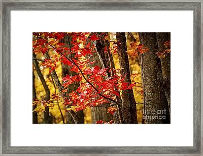 Fall Forest Detail Framed Print by Elena Elisseeva