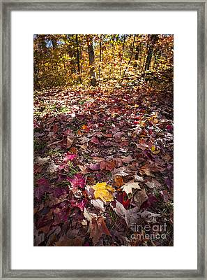Fall Forest Floor  Framed Print by Elena Elisseeva