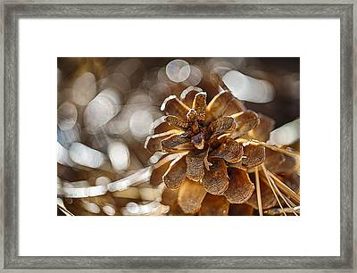 Fall Hike Up Humber Framed Print by Scott Campbell