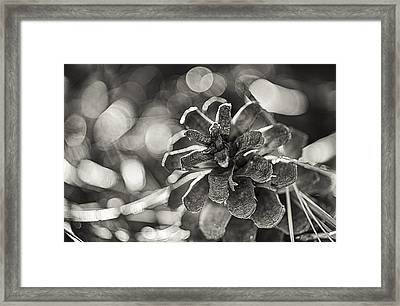 Fall Hike Up Humber Sepia Framed Print by Scott Campbell