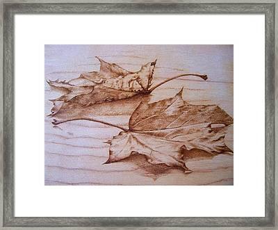 Fall In Framed Print by Cynthia Adams